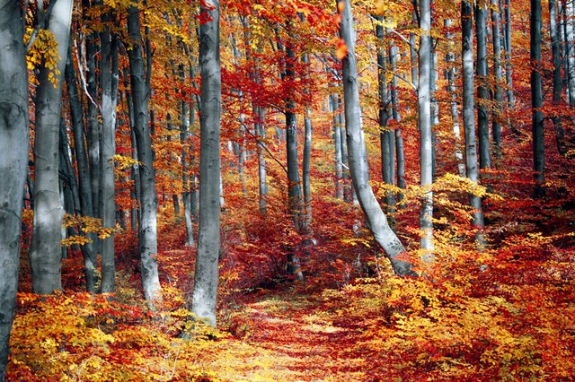 oil painting of fall trees